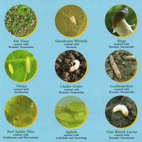 Nematodes - Pest Control