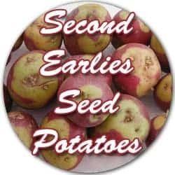 Second Earlies seed potatoes